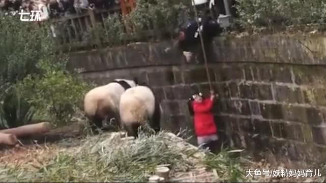 家长愚蠢,女童掉入熊猫饲养池,动物园:不加钱,但很危险