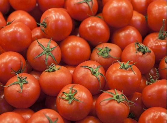 """应当如何判断西红柿有出有打""""催红素""""? 菜农: 看那2处所便止了"""