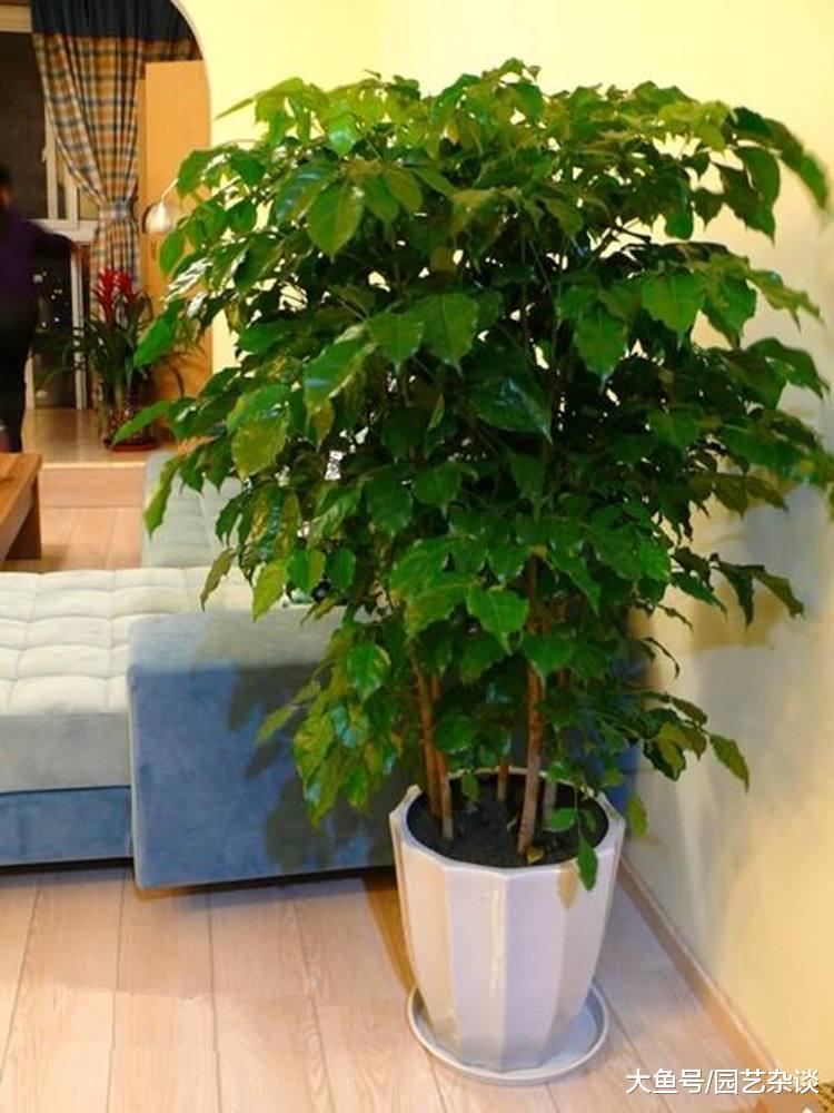 这些植物养在客厅, 好处多多, 喜欢的养起来吧!