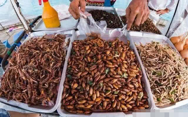 这些有益的昆虫, 1小时灭800个蚊子, 却被中国吃货吃到灭绝
