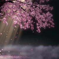 山东的爱美的小仙仙