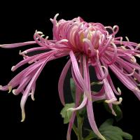 小康谈花卉
