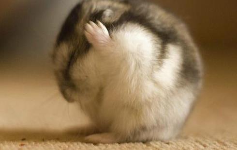 「大金鼠」8月必有一劫,都是上天的安排!快来对照下