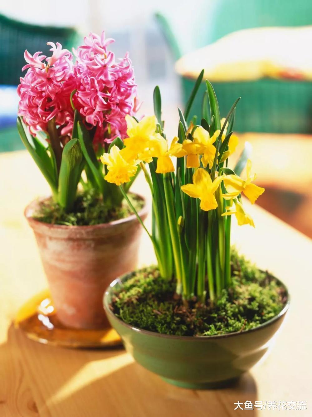 冬春时节开花的植物, 在秋末定期补充磷酸二氢