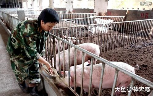 """11月9日猪价:连续下跌,""""飞天猪""""颓势明显,养殖户纷纷叫屈"""