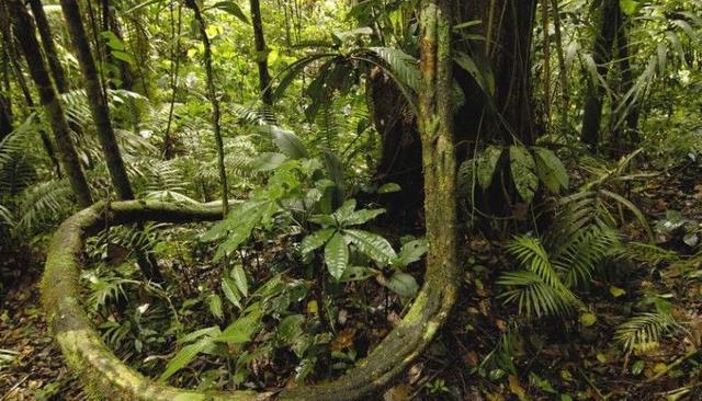 若是您单独一人在亚马逊森林供死,以下兵器4选1,您会利用哪个?