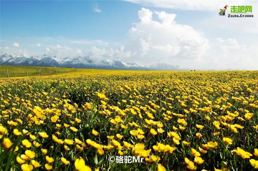 秋天的金黄色已经成为这里的代名词,而当南方的春天告一段落,新疆的
