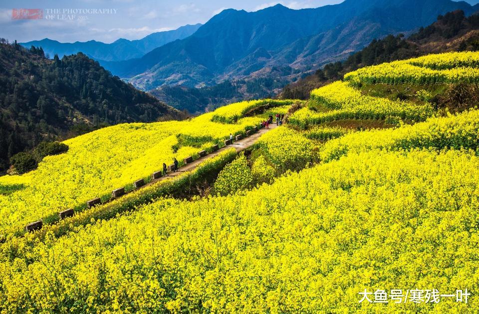 往浙江衢州赏油菜花,本地人竟用发霉的肉招待人人,我出敢动筷