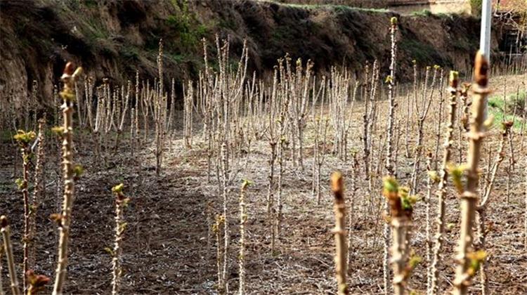 黑龙头该如何栽种,人们需供一日千里,快去进修吧!