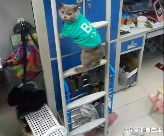 """年夜教宿舍个个皆是人才,指点员""""突击搜检"""",猫咪是怎样回事?"""