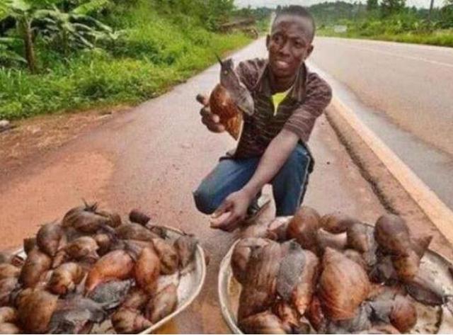 非洲人最讨厌吃的一种肉,价格比青菜还便宜,在我国却不够吃