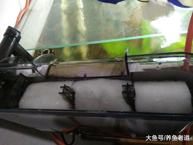 把一个鱼缸的陶粒全部倒到另一个鱼缸里,水质如何快速澄清?
