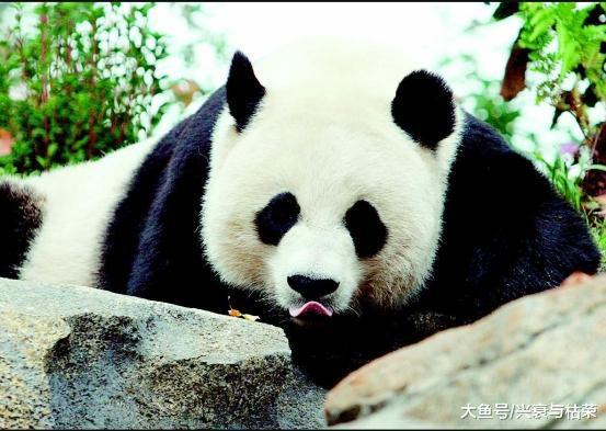 那个好国女子将年夜熊猫匪走, 并靠此取得巨额财产, 早年却糊口凄凉