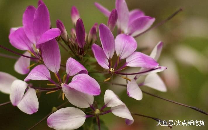 这类家死动物朵朵小花犹如翩翩起舞的胡蝶, 惹人爱好, 您睹过出