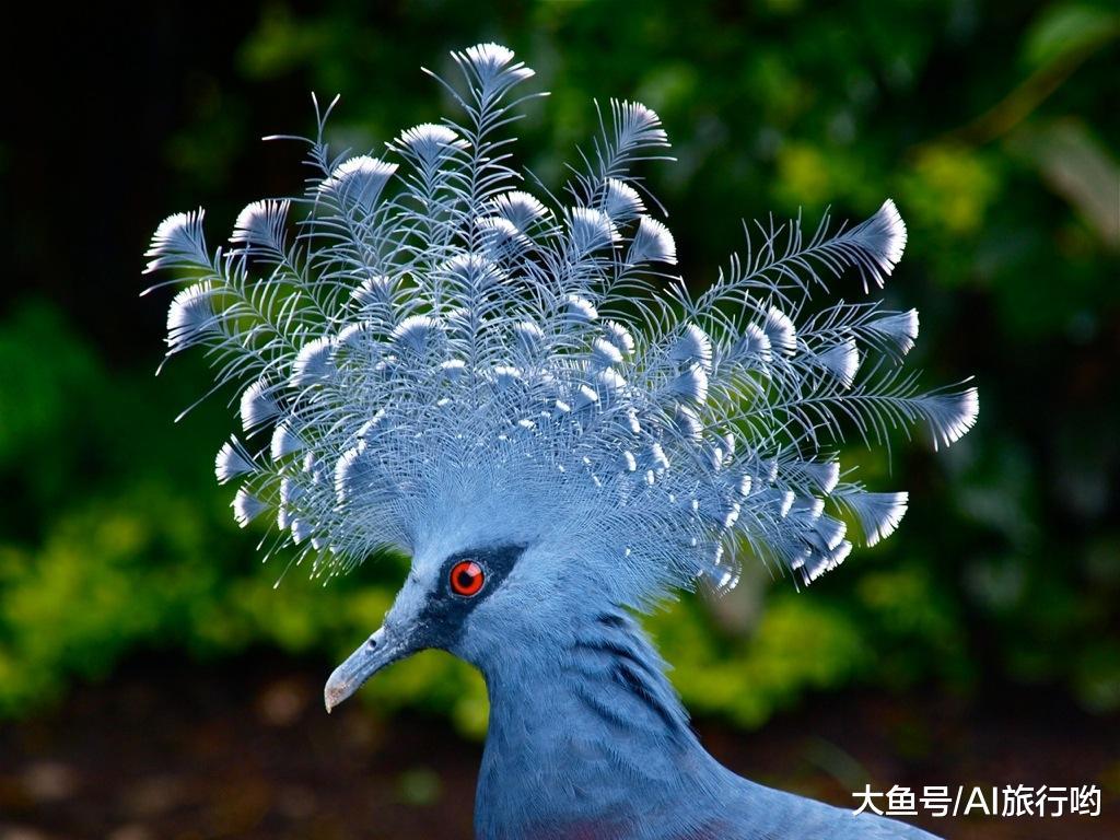 本是最像凤凰的动物,曾每年5万只被制成图片