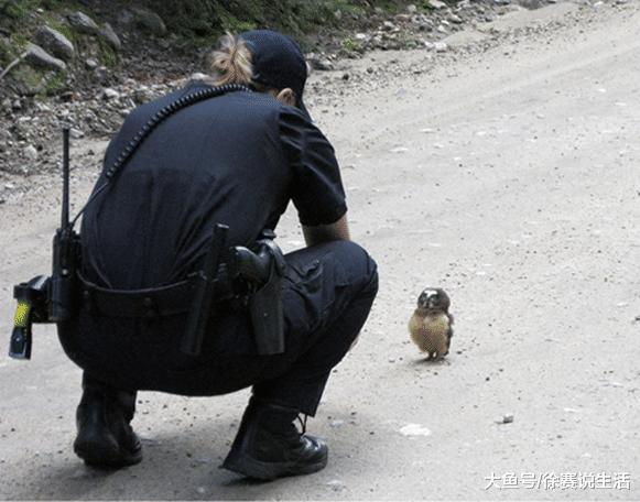 小猫头鹰挡警车前不让过, 女警下车后也是啼笑皆非