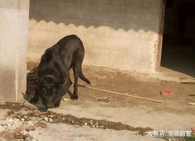 出去旅游,如果看到下面5种狗,一定要躲远一点!都是潜在的危险