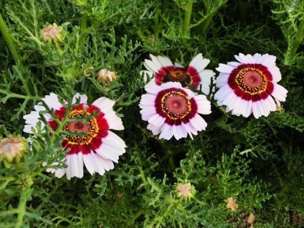 """非常有""""特色""""的1种花卉,养在家中,看了让人心情舒畅,还好养"""