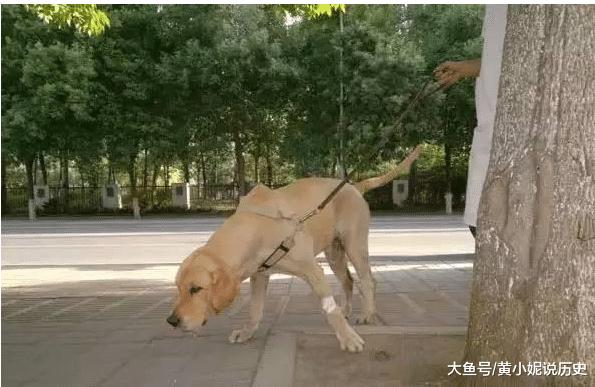 狗狗中暑身亡,这样的低级错误你不该犯!
