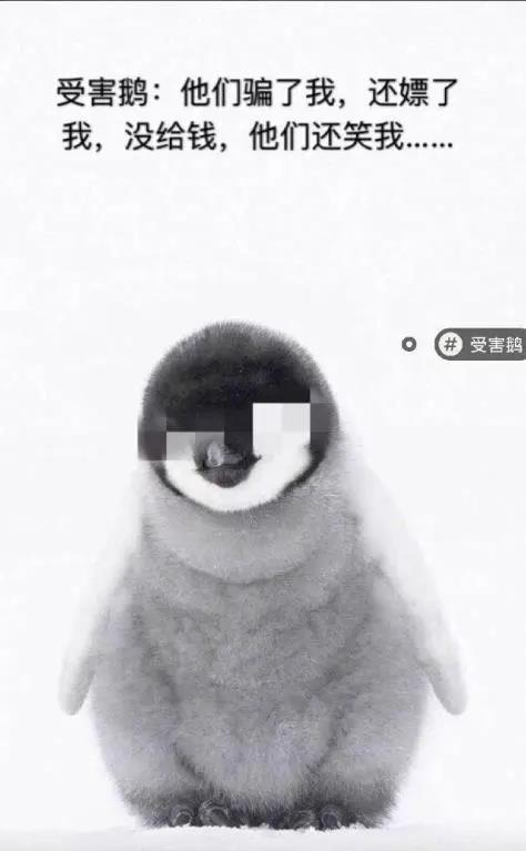 《【煜星娱乐客户端登录】这鹅真傻假傻?企鹅不哭,干了这碗老干妈》