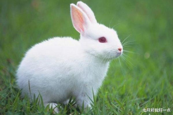 """新版 天龙八部 _99岁得道高僧:""""生肖兔""""10月下旬要大难临头,能躲过就是福!"""