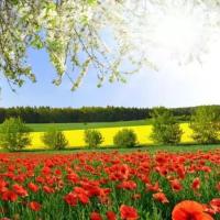 花花世界迷人眼