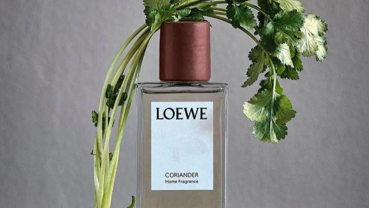 一上架就秒空!LOEWE的香菜味香水究竟有什么魔力?