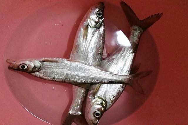 路亚装备被没收,钓鱼被禁止? 路亚钓法 路亚 钓鱼 端游热点  第5张