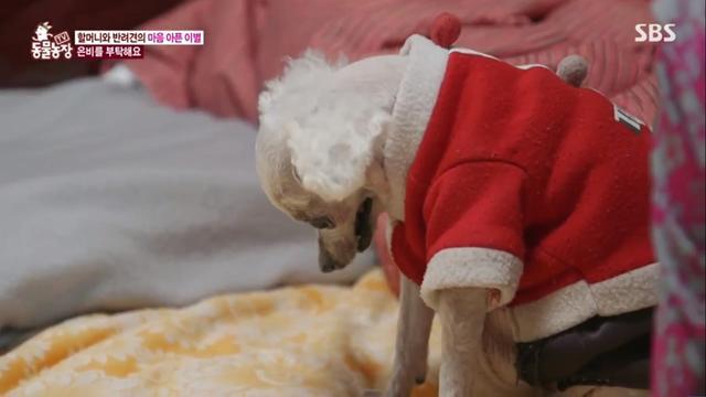 相依为命14年,婆婆执意把狗狗送走:它值得更好的主人!