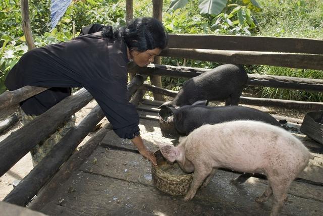2月14日,猪价压不住?2万吨储备肉泼冷水,猪价会跌吗?答案来了