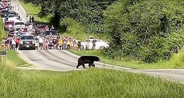 黑熊千里寻妻感动路人,羚羊妈妈挡在鳄鱼面前坦然赴死拯救孩子(孩子)