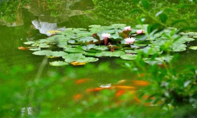 隐藏在水中的4种美食,除了莲藕你还知道谁?全认识的是吃货大神