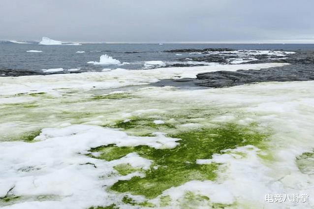 地球突现3大奇景异象:南极绿雪,阿尔卑斯染红,极地出现夜光云 极地气候 科学 南极 每日推荐  第2张