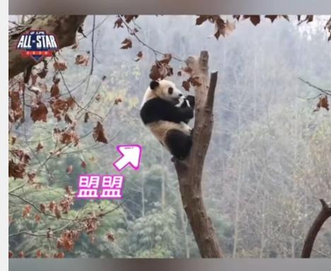 《【煜星娱乐平台首页】LPL认养国宝——大熊猫》