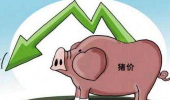9月14日生猪价格持续下跌,猪价何时停止?双节期待着空虚的恐惧!