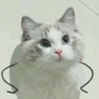 凡猫逗你笑