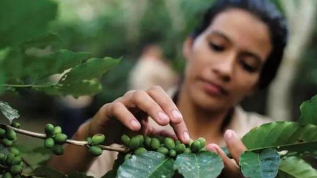 印度女婴因父母没钱买奶粉,喝咖啡长大令人惊奇,现在过得如何?