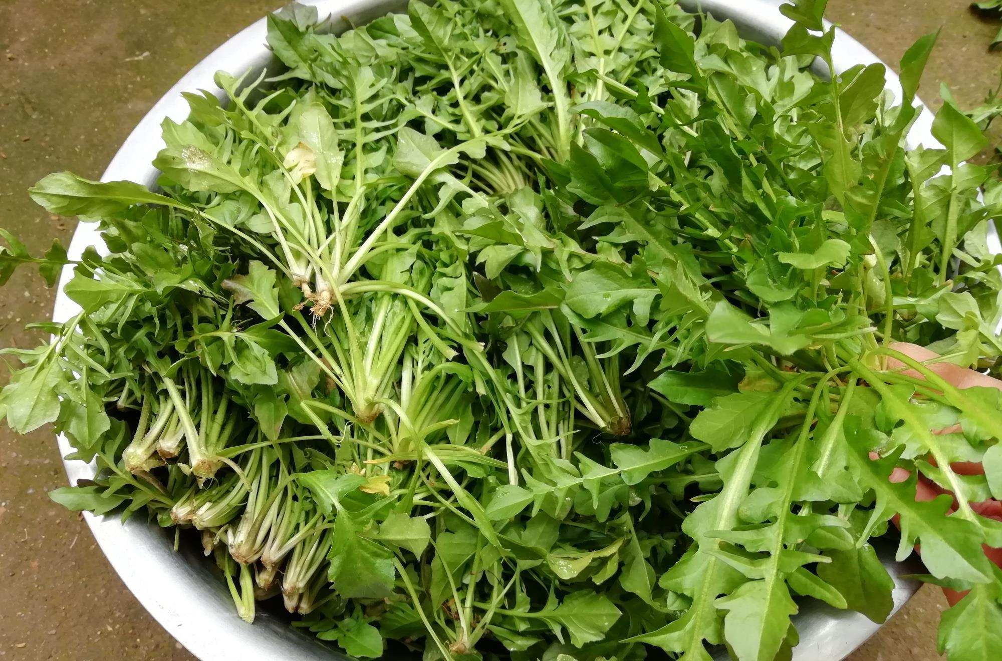 下锅前,这5种野菜必须焯水,为了家人的健康,再懒也别省这一步