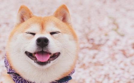 狗狗吃醋离家出走,假装流浪狗寻找真正爱自己的人