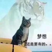 酷猫聊娱乐