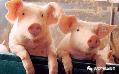 2020年6月30【全国猪价】多地破19,又是一片红!