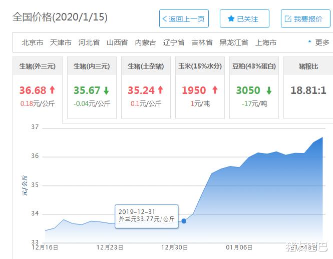 """1月16日猪价:14跌!猪价大范围""""扑街"""",怪谁?屠企还是终端!"""