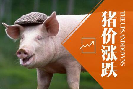 猪价持续下跌,部分猪价跌到14元一斤,年底涨跌?看完有数了