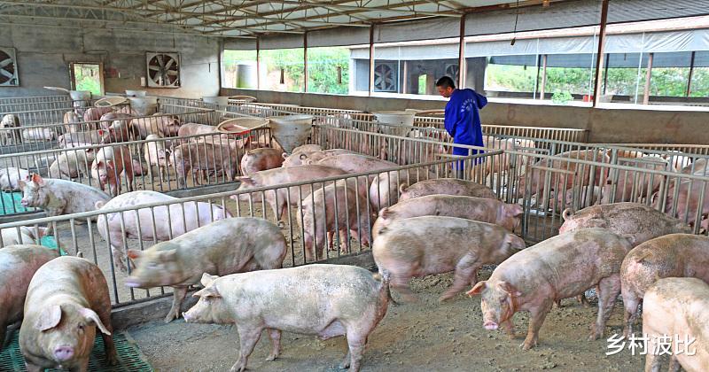 猪价持续12连跌,目前已经跌破18元大关,有人预测两年后将跌破10元?