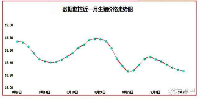 """9月9日猪价:8跌18平!猪价""""僵持不前"""",上涨""""变数""""来袭!"""