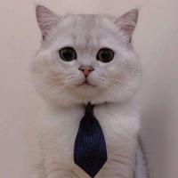 爱听故事的猫