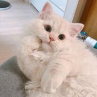 绒绒猫爱美食