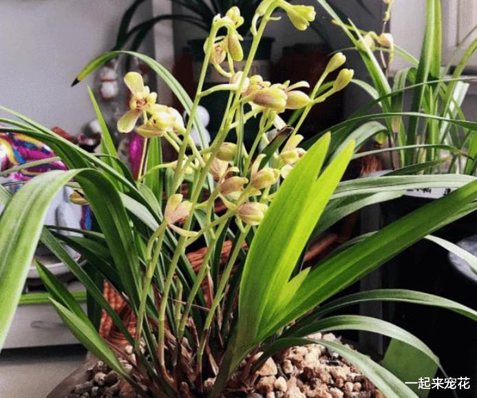 合适新手的2莳花卉,皮实好养长势旺,养成盆景代价高