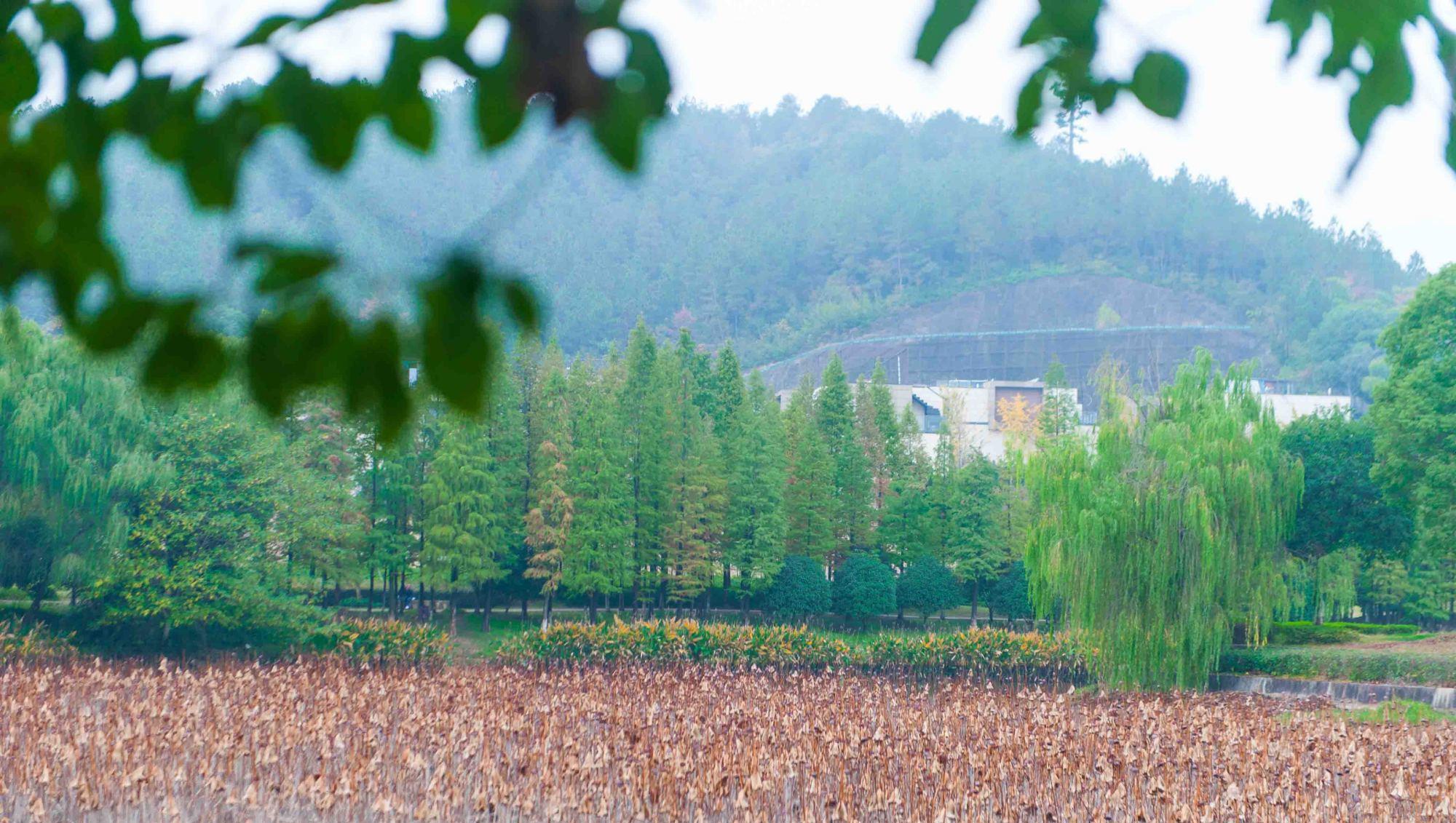 杭州有一处花海!能够看烟花、听演唱会,十一去正遇上举
