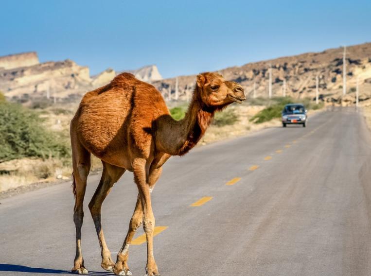 于月仙车祸案再起波澜?宋祖德发声:怀孕骆驼不会在夜间乱串